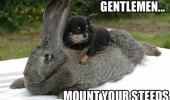 dog animal sitting rabbit mount your steeds funny pics pictures pic picture image photo images photos lol