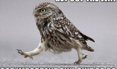 owl bird animal get out way important shit funny pics pictures pic picture image photo images photos lol