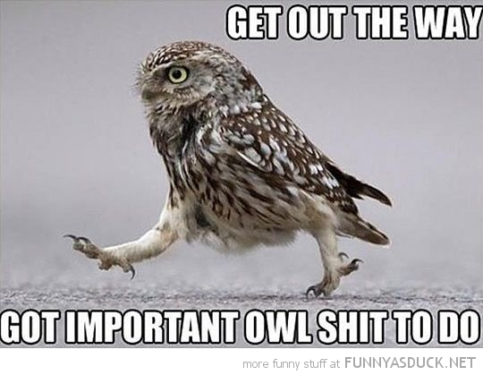 owl bird animal get out way important shit funny pics pictures pic ...
