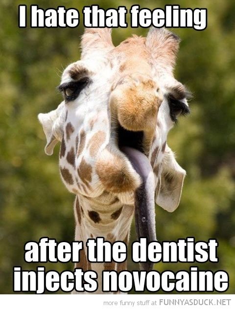 giraffe tongue out animal dentist injects Novocaine funny pics pictures pic picture image photo images photos lol