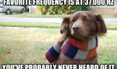 hipster dog animal favorite sound probably never heard it funny pics pictures pic picture image photo images photos lol