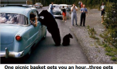 hooker yogi bear animal picnic baskets all night car funny pics pictures pic picture image photo images photos lol