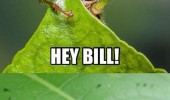 insects animals waving sup bob funny pics pictures pic picture image photo images photos lol