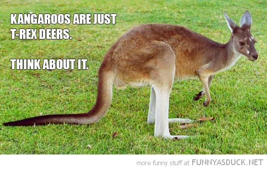 kangaroo t-rex deer animal dinosaur funny pics pictures pic picture image photo images photos lol