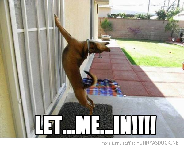 let me in dog stretching door animal funny pics pictures pic picture image photo images photos lol