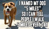 named dog animal 5 miles walk every day funny pics pictures pic picture image photo images photos lol