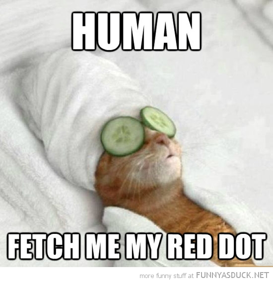 pampered cat lolcat animal human fetch me red dot funny pics pictures pic picture image photo images photos lol