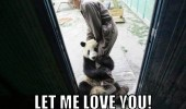 panda bear animal holding mans leg let me love you funny pics pictures pic picture image photo images photos lol