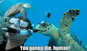 sea turtle blowing divers snorkel animal die human funny pics pictures pic picture image photo images photos lol