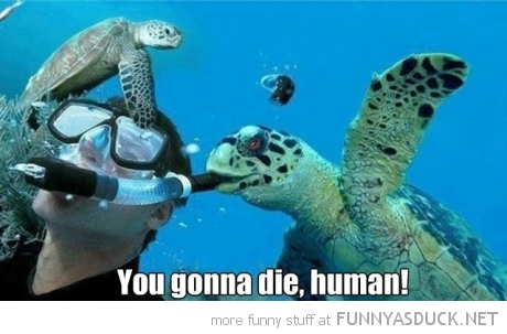 Sea Turtle Blowing Divers Snorkel Animal Die Human Funny Pics Pictures