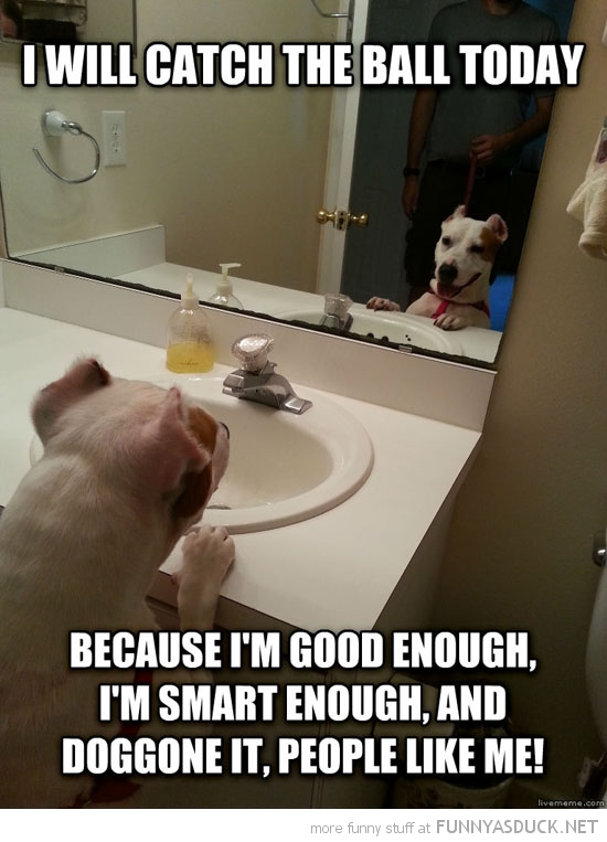 self motivation dog animal mirror will catch ball funny pics pictures pic picture image photo images photos lol