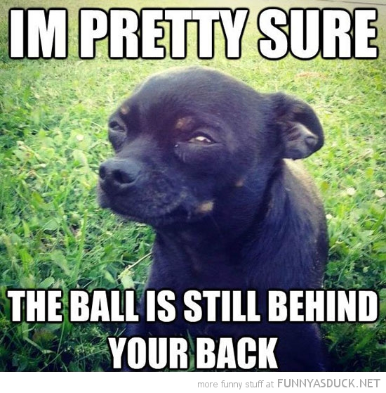 skeptical dog animal pretty sure ball behind back funny pics pictures pic picture image photo images photos lol