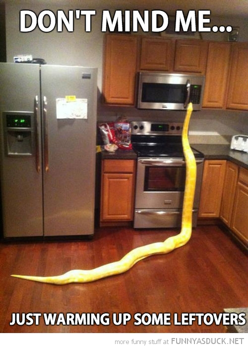 snake kitchen cupboard animal don't mind me heating up leftovers funny pics pictures pic picture image photo images photos lol