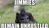 success gorilla jimmes remain unrustled funny pics pictures pic picture image photo images photos lol