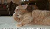 thinking cat lolcat animal pee not to hamlet funny pics pictures pic picture image photo images photos lol