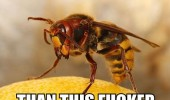 break illusion manliness wasp insect animal funny pics pictures pic picture image photo images photos lol