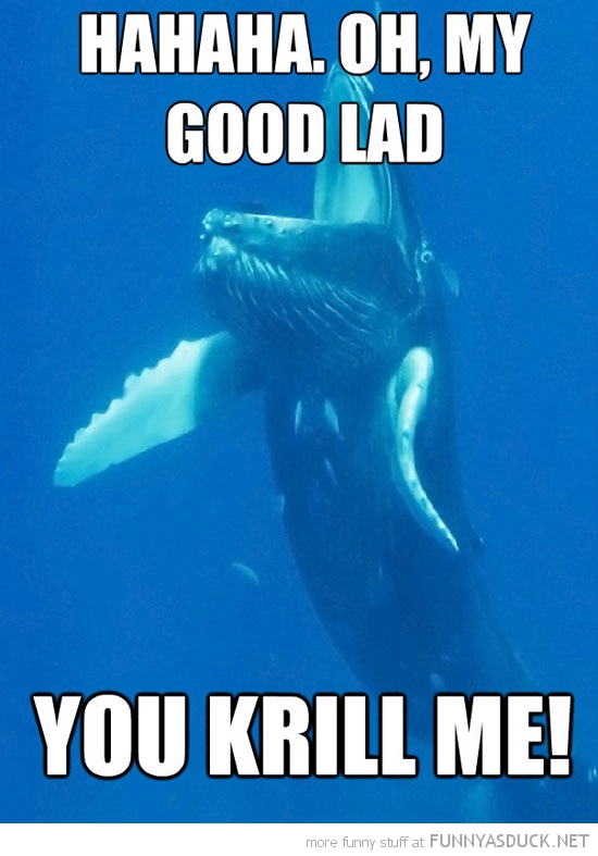 whale laughing you krill me animal pun  funny pics pictures pic picture image photo images photos lol