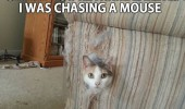 you're home early cat lolcat animal ripped couch sofa chasing mouse funny pics pictures pic picture image photo images photos lol