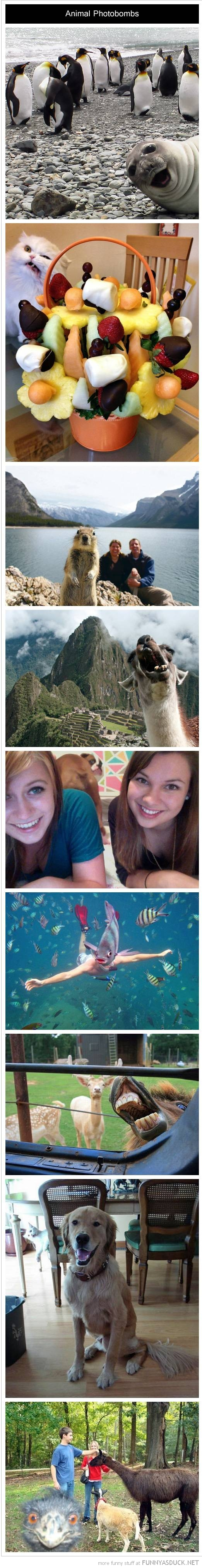 animal photobomb compilation funny pics pictures pic picture image photo images photos lol