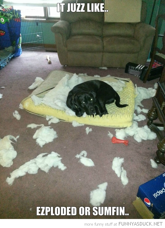 burst cushion dog animal just exploded funny pics pictures pic picture image photo images photos lol