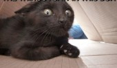 scared cat lolcat animal seen in box cannot be unseen funny pics pictures pic picture image photo images photos lol