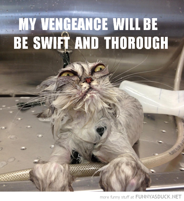 cat bath wet animal vengeance swift funny pics pictures pic picture image photo images photos lol
