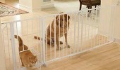 cat flap child gate dog whos mans best friend animal funny pics pictures pic picture image photo images photos lol