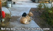 cat sitting dog animal do this everyday outside house funny pics pictures pic picture image photo images photos lol