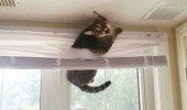 cat animal stuck blind window help me funny pics pictures pic picture image photo images photos lol
