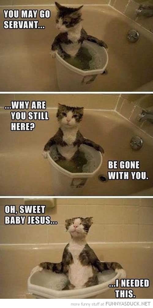 cat taking bath animal go now servant funny pics pictures pic picture image photo images photos lol