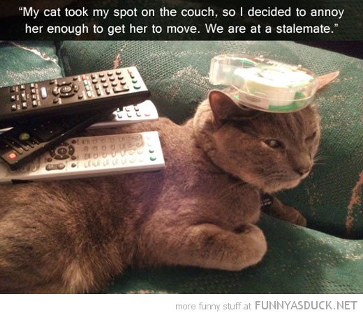 cat took spot couch animal stalemate funny pics pictures pic picture image photo images photos lol