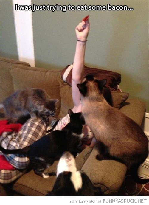 cats dogs pile on girl just trying eat bacon funny pics pictures pic picture image photo images photos lol