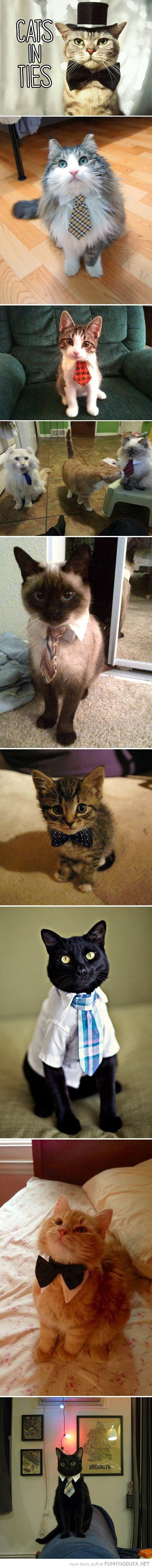 cats in ties animals funny pics pictures pic picture image photo images photos lol