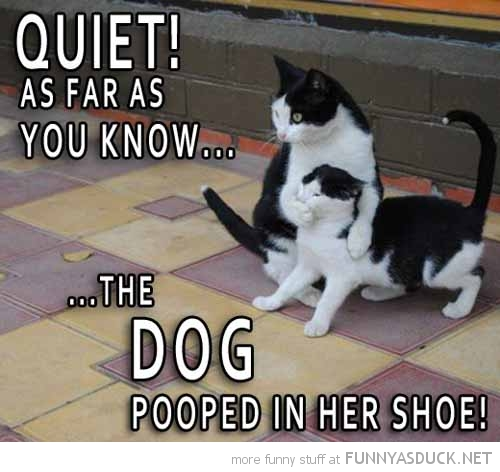 cats animals holding mouth quiet dog pooped shoe funny pics pictures pic picture image photo images photos lol