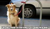 clumsy dogs tangled outside shops animals funny pics pictures pic picture image photo images photos lol
