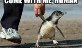 come with me human penguin animal funny pics pictures pic picture image photo images photos lol