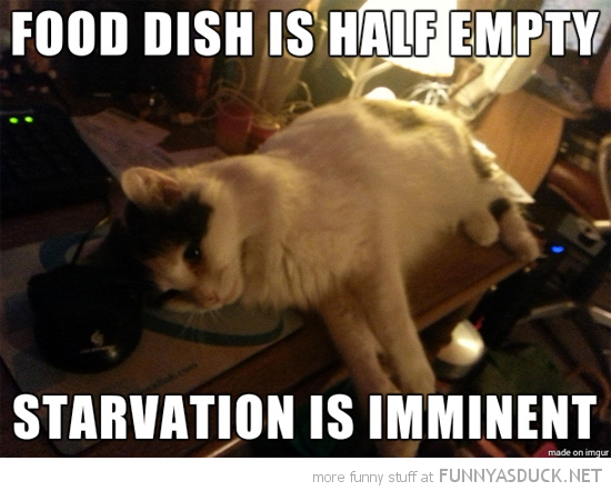 depressed cat lolcat animal food bowl empty starvation imminent funny pics pictures pic picture image photo images photos lol