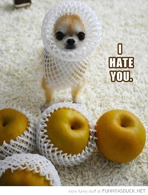 dog animal apple mesh i hate you funny pics pictures pic picture image photo images photos lol