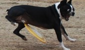 dog animal hit crotch frisbee friendly game catch funny pics pictures pic picture image photo images photos lol