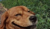 dog animal smiling thinking what i am funny pics pictures pic picture image photo images photos lol