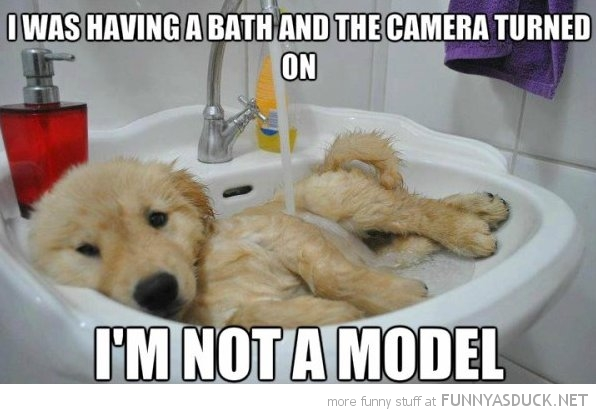 dog taking bath not a model animal funny pics pictures pic picture image photo images photos lol