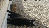 cat lolcat animal lying side doing it wrong funny pics pictures pic picture image photo images photos lol