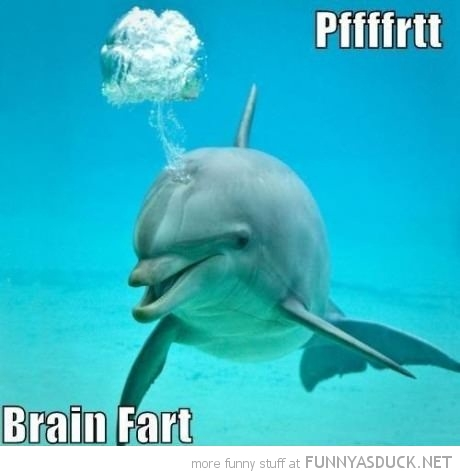 dolphin animal brain fart funny pics pictures pic picture image photo images photos lol