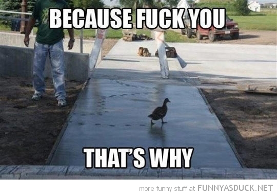 duck walking wet cement fuck you animal funny pics pictures pic picture image photo images photos lol