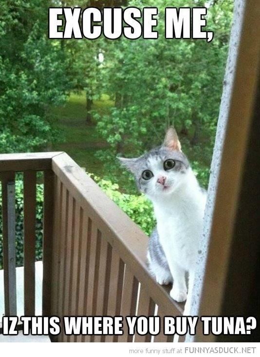 excuse me cat door this where buy tuna funny pics pictures pic picture image photo images photos lol