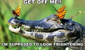 happy alligator animal butterflies head get off me look frightening funny pics pictures pic picture image photo images photos lol