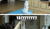 happy cat lolcat animal playing dancing for me funny pics pictures pic picture image photo images photos lol