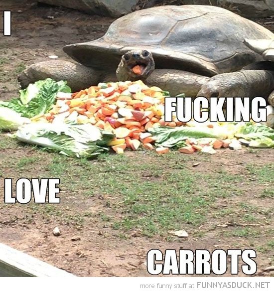 happy turtle animal fucking love carrots funny pics pictures pic picture image photo images photos lol