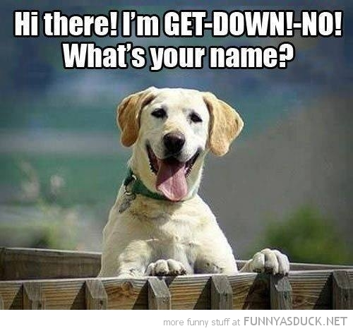 hi I'm get down no happy dog animal funny pics pictures pic picture image photo images photos lol