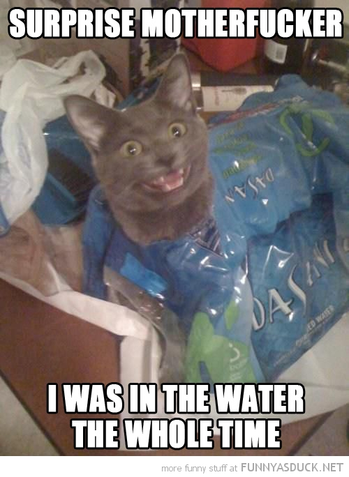 cat animal hiding surprise motherfucker in water whole time funny pics pictures pic picture image photo images photos lol